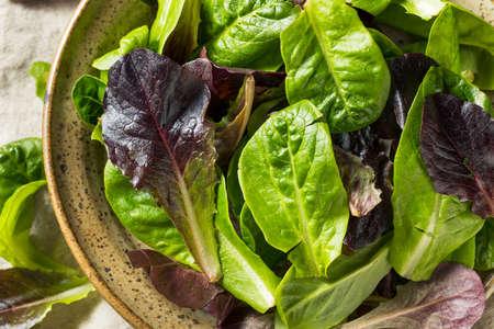 Raw Green Organic Baby Romaine Lettuce in a Bowl Фото со стока