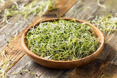Rohe grüne Bio-Zwiebelsprossen verzehrfertig