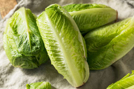 Organic Healthy Green Romaine Lettuce Ready to Chop