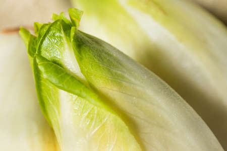 Raw Organic Belgian Endive Ready to Use