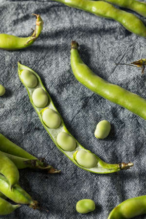 Raw Green Organic Fava Beans Ready to Cook