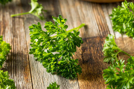 Raw Green Organic Curly Parsley in a Bunch Imagens
