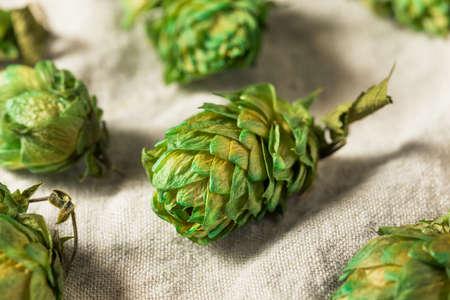 Raw Green Organic Fresh Beer Hops Ready to Brew