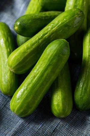 Mini concombres de cocktail biologiques verts crus en botte