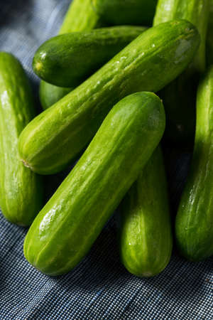 Mini pepinos de cóctel orgánicos verdes crudos en un manojo