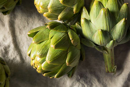 Rohe grüne Bio-Artischocken kochfertig Standard-Bild