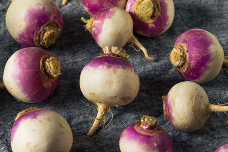Raw Organic Purple Turnips Ready to Eat