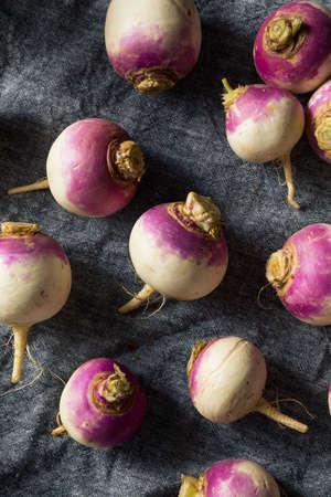 Raw Organic Purple Turnips Ready to Eat Banco de Imagens - 133002525