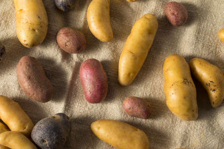 Raw Organic Fingerling Potatoes Ready to Eat