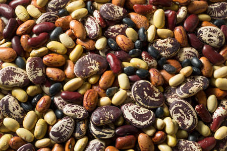 Raw Dried Organic Bean Assortment Ready to Cook