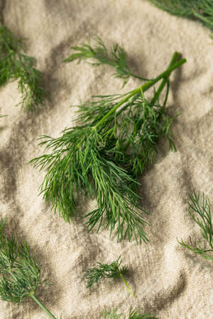 Raw Green Organic Dill Herb in a Bunch