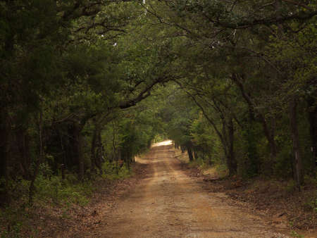 Dirt road under canopy of oaks