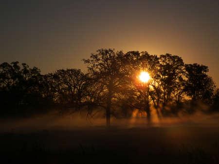 Sunrays through trees on foggy morning