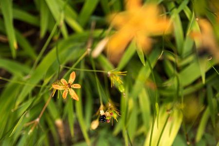 mellifera: Close up of beautiful yellow flower