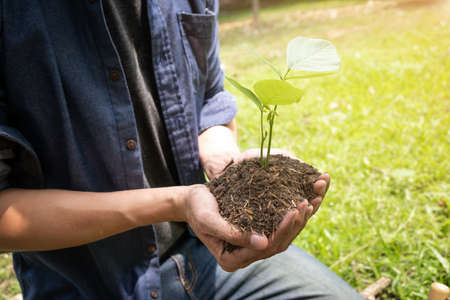 The young man holding the seeding tree to plant in the garden to preserve environment concept, nature, world, ecology and reduce air pollution. Stock Photo