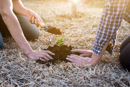 Two young men planting tree in the garden to preserve environment concept, nature, world, ecology and reduce air pollution.