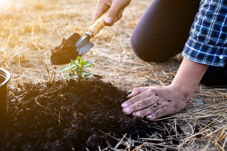 The young man is planting the tree in the garden to preserve environment concept, nature, world, ecology and reduce air pollution.