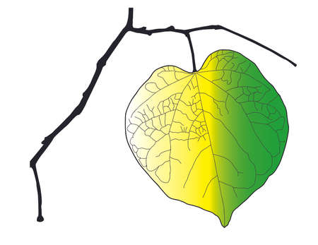 Dying Leaf with yellow white and green color mixed vector art