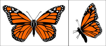 Front and Side view of Colorful monarch butterfly - vector illustration art Illusztráció