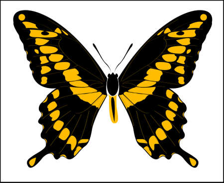 Vector illustration drawing of Giant Swallowtail butterfly isolated on white background