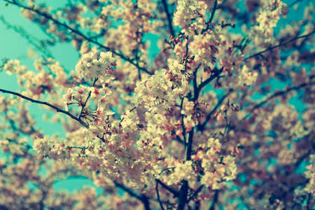 submersion: Vintage cherry flowers