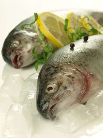 Closeup of two fresh trouts on ice cubes Stock Photo - 13193412