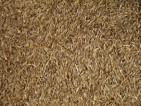 Close up of grass seed, wallpaper, background photo