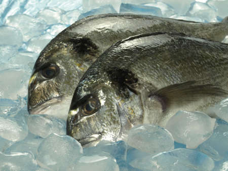 cooled: Two raw dorado fish on cooled market stand Stock Photo