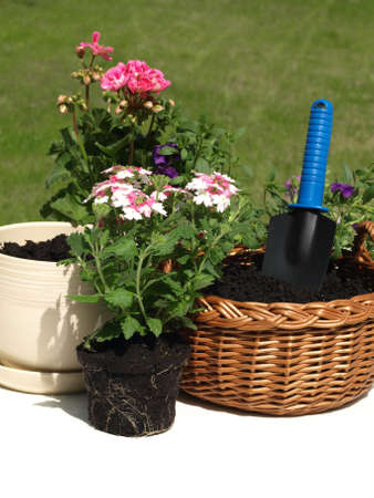 wicker work: Flowerpots, seedlings, and garden tools on the grass Stock Photo