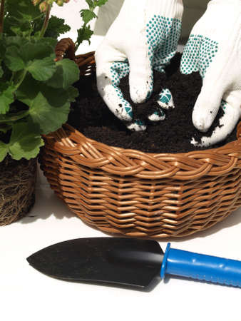 Man in white gloves planting a seedling Stock Photo - 13710842