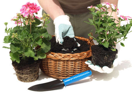 wicker work: Putting the flowers in the black soil