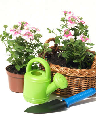 Flowerpot, wicker, seedling and shovel on white background photo
