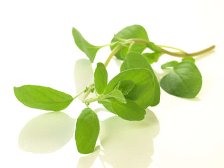 marjoram: Branch of marjoram on white isolated background