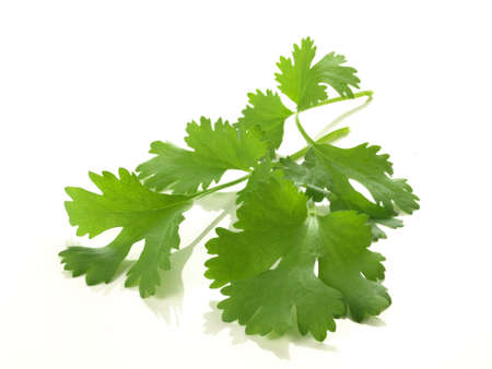 coriander: Branch of coriander on isolated white background