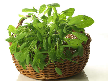 Sage plant in basket on white isolated background photo