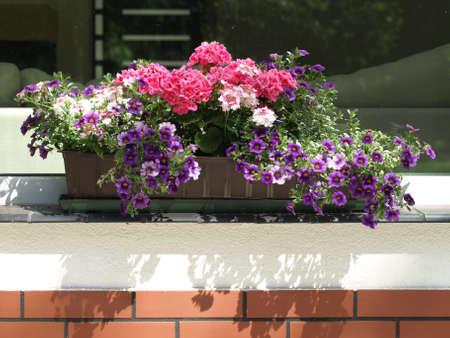 parapet: Colorful flowers in the flowerpot on parapet