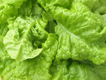 crusty: Closeup of green crusty lettuce leaves, background