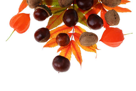 Autumn background  colorful leaves, nuts and chestnuts photo