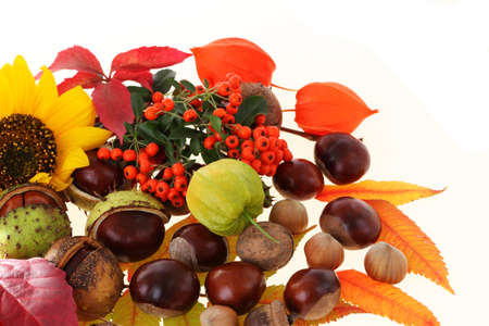 Sunflower, rowan, chestnuts, walnuts, hazelnuts and physalis Stock Photo - 15615358