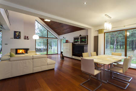 modern living room: Contemporary living room with the sitting dog