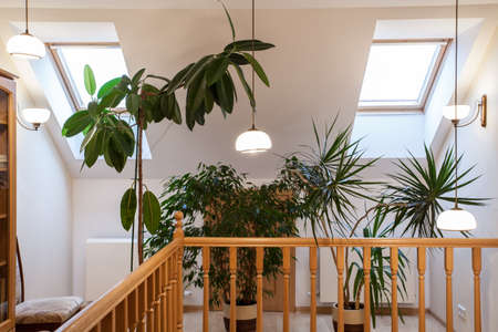 Flowers and plants on the corridor on attic Stock Photo - 16643816