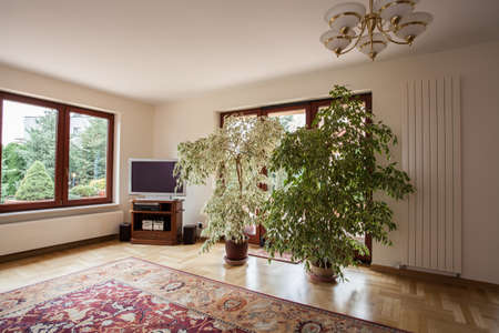 Large, green plants in the conservatory room photo
