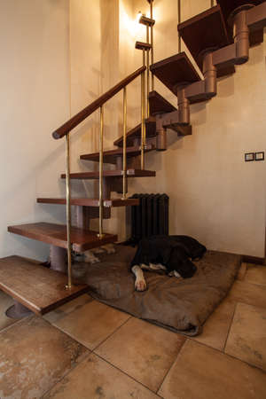 cloudy home: Cloudy home - dog lying under a wooden stairs Stock Photo