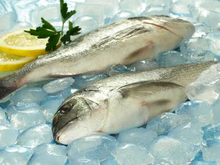sparus: Raw dorado fish on ice for dinner