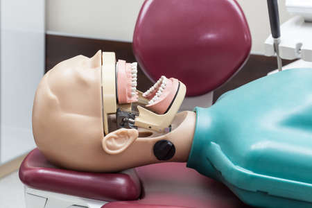 Plastic model with teeth at dentist office Stock Photo - 19156163