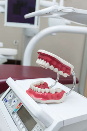 Plastic jaw as an example, dentist work Stock Photo - 19164523