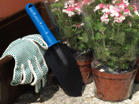farming tools: Close up of the flowers and spade