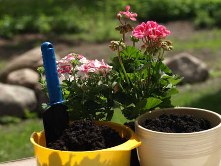 black soil: Two colorful flowerpots filled with black soil