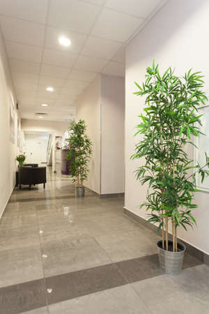 Interior of new office, corridor with plants photo