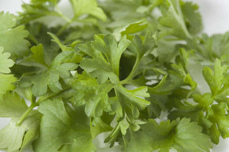 Close up of green fresh coriander leaves photo